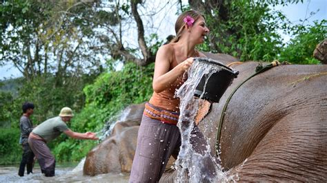 Elephant Project & Environmental Protection | Volunteer in