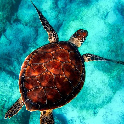 The Top 4 Countries to Volunteer with Sea Turtles | Go