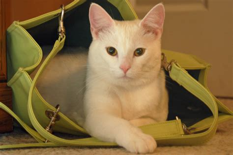 Bubba in a bag   Bags, Photo